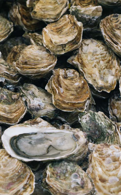 best oysters and seafood restaurant Fort Myers Florida